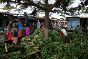 Kochbananen auf Markt