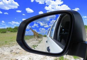 Reisen nach Namibia Giraffe im Rückspiegel