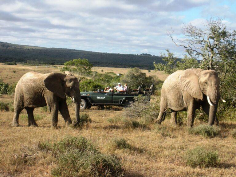 Elefanten auf Safari