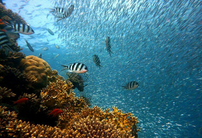 Seychellen bunte Unterwasserwelt