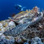 Tauchende Schildkröte im Meer von Seychellen